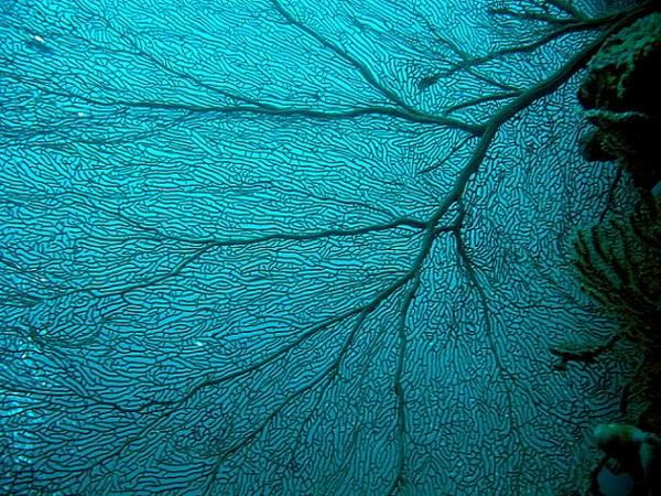 Album - Jardin sous-marin (5)
