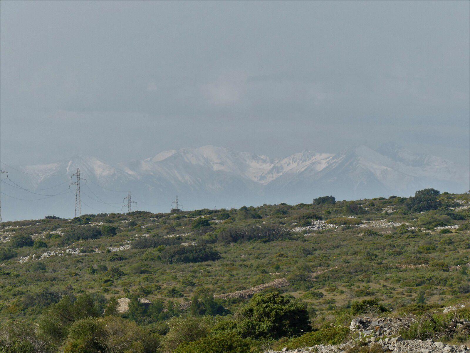 Le Planal de la Garrigue Fitou 03 Mars 21