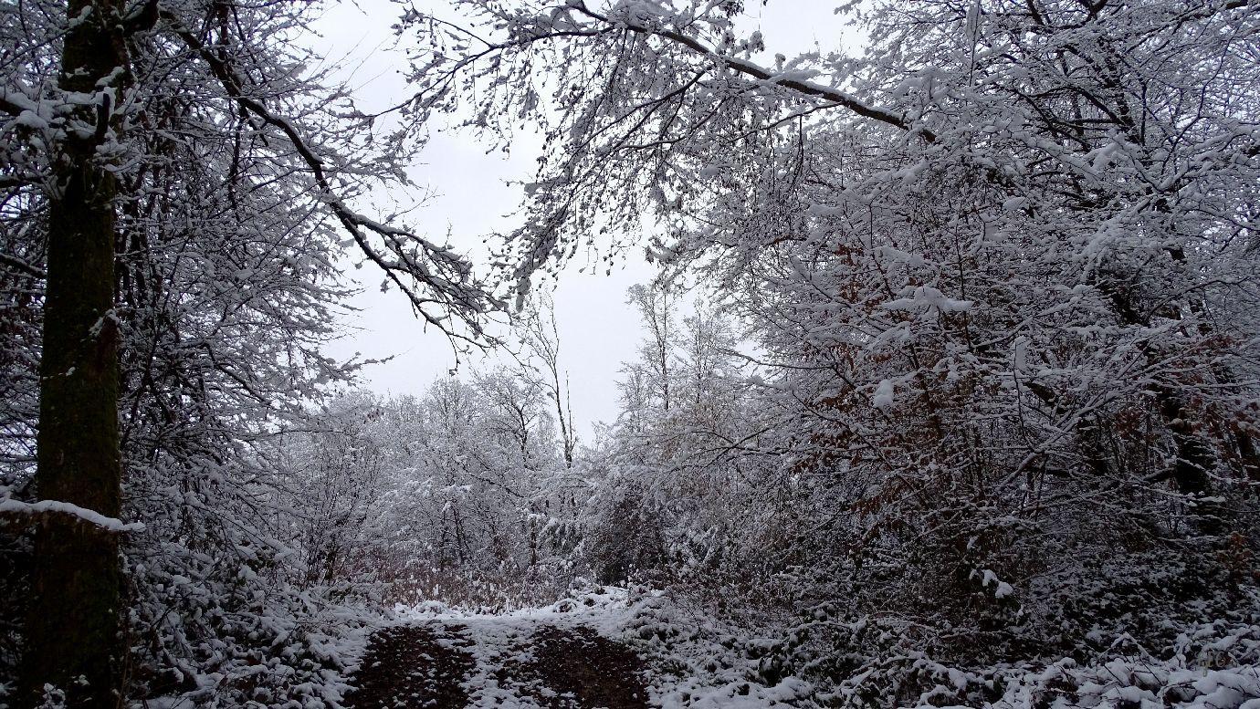 Un petit tour en forêt ce matin - 8 photos