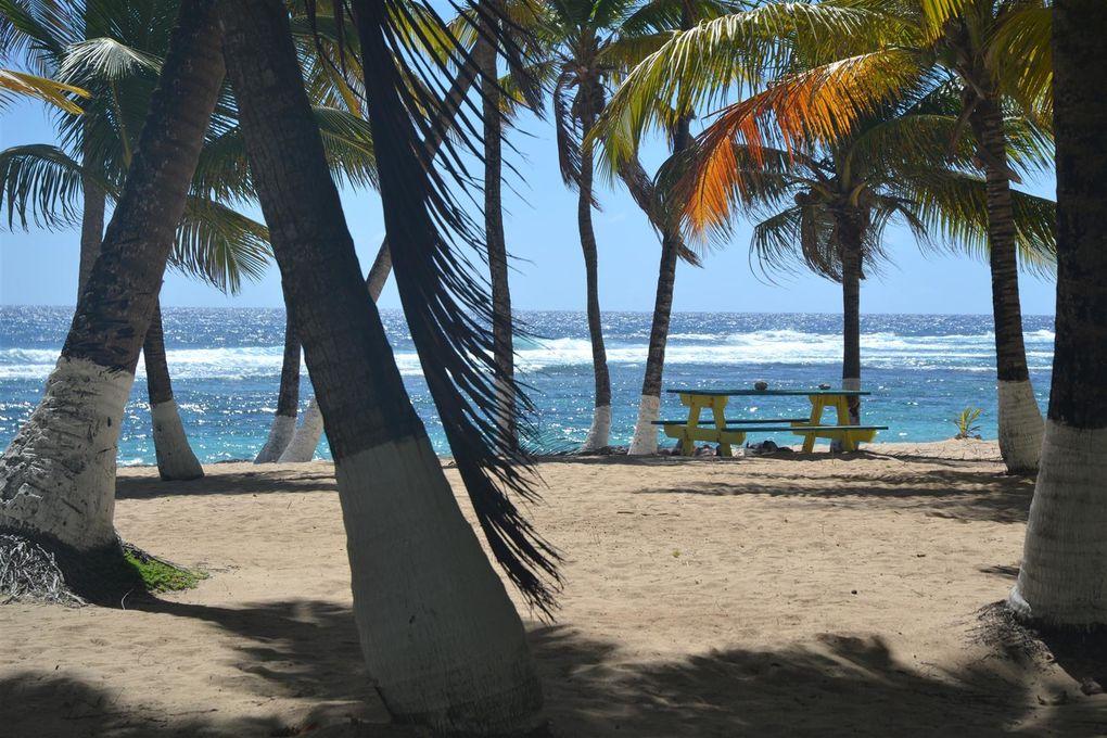 Images de l'île de la désirade