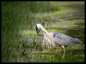 Photographies Nature by VL (Cliquez pour agrandir)