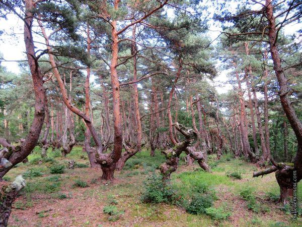En baladant dans la forêt...