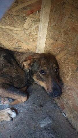 A l'adoption : Délia