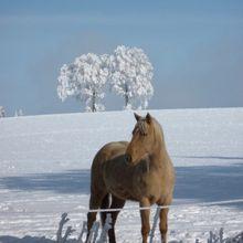 Les chevaux de neige