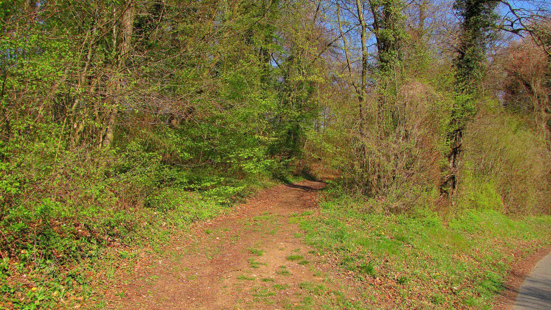 Randonnée en forêt de Compiègne_la Grotte des Ramoneurs_les Tournantes de la Queue de Saint-Etienne et de Roilaye