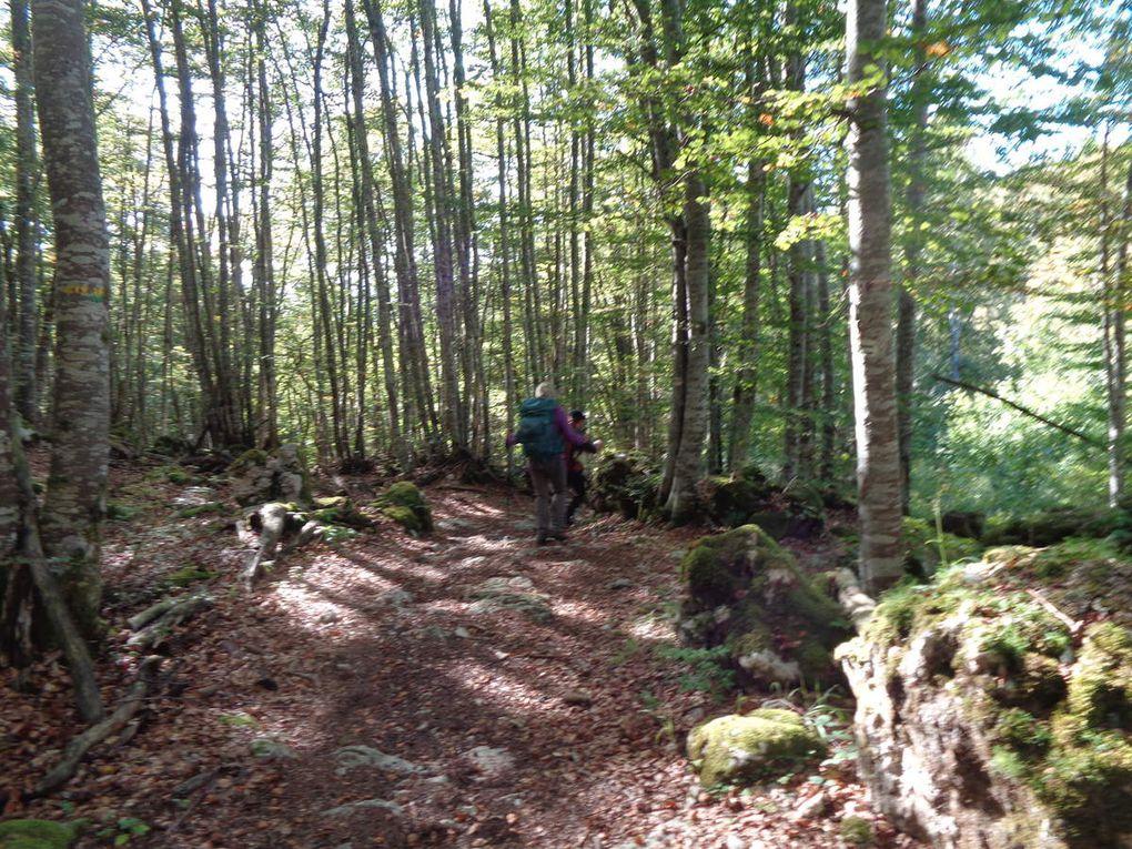 Le Faz- La Lunette la forêt des Coulmes