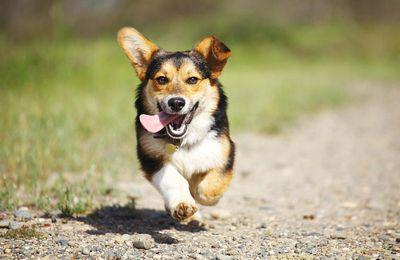 Pétition : Pour l'aménagement d'un parc canin sur la place André Meunier