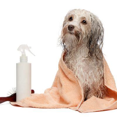 Traitement de la dermatite atopique canine : mieux vaut faire simple