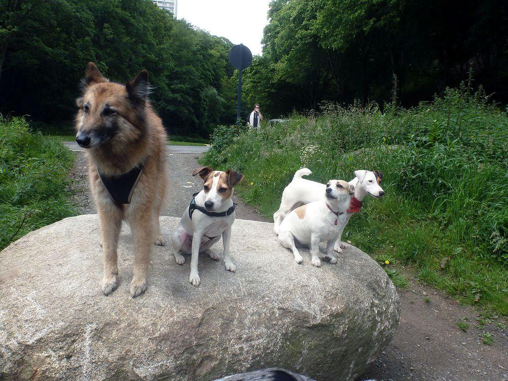 Et le dimanche matin, c'est canimarche au Gouédic. On traverse le joli parc de la vallée pour descendre jusqu'au Légué.