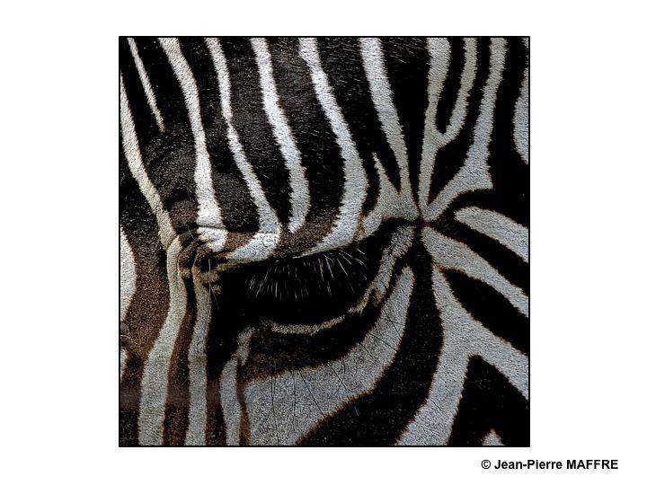 Les rayures sont parfois très prisées dans l'art contemporain. Pas de chance car Dame Nature y a pensé bien avant.