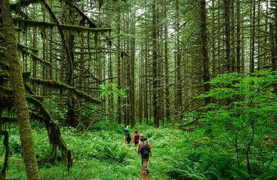 Quelle est la véritable définition de l'écotourisme ?