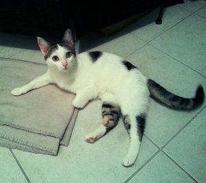Louza, jeune chatte, à l'adoption -> adoptée