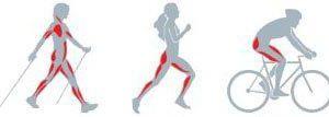 80 % de nos muscles travaillent !