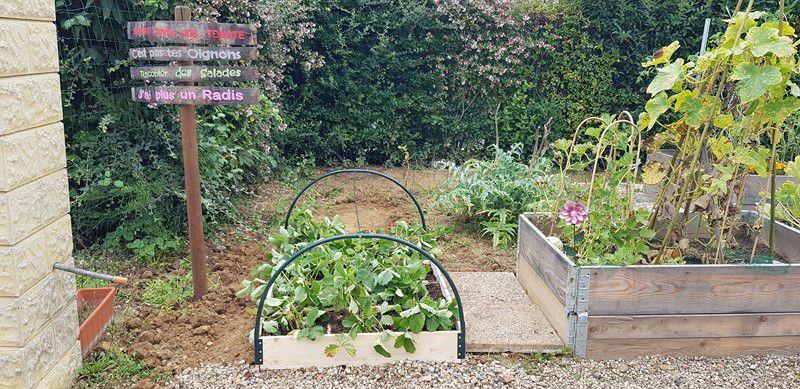 Mon jardin de fille :  Phase Fraises !