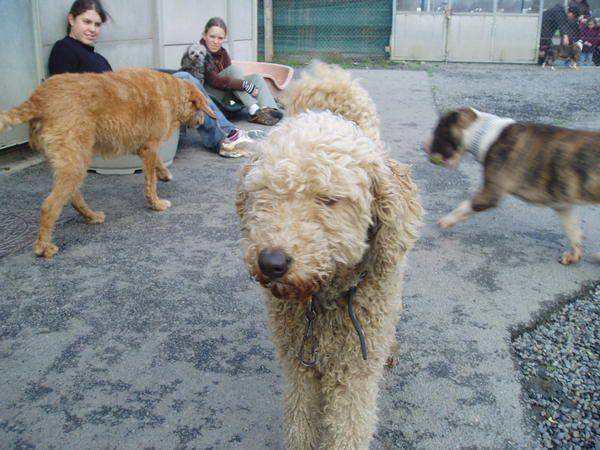 Ces chiens ont trouvé une nouvelle famille !