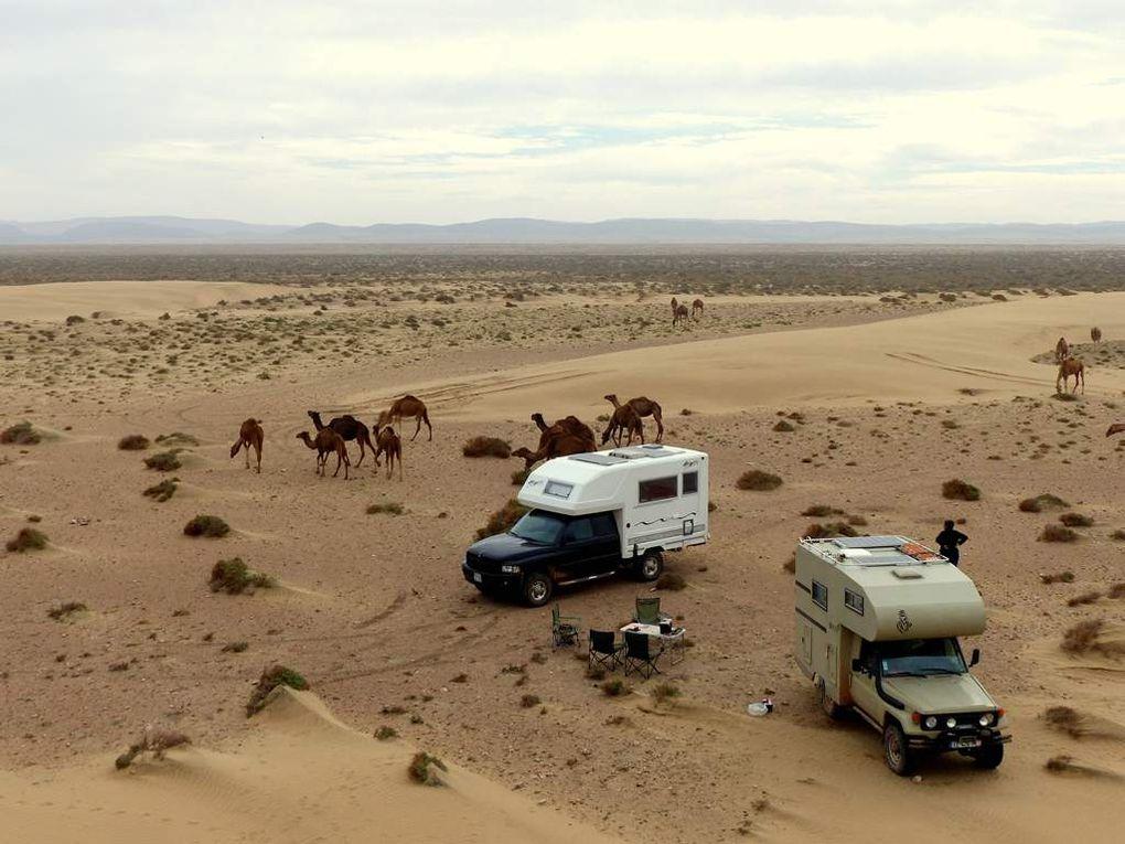"""On dit toujours """"chameaux"""" mais chacun sait qu'il s'agit de dromadaires ..."""