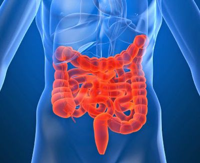 Irritable Bowel Syndrome and Ganoderma
