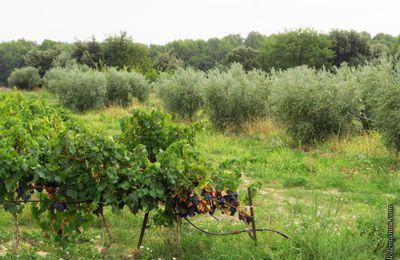 Balade d'automne dans les champs et vignobles