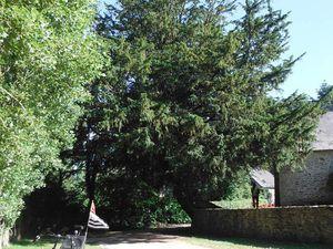 Sur la passerelle qui enjambe un bras de l'Oust ; sur le site ; l'if ; la chapelle