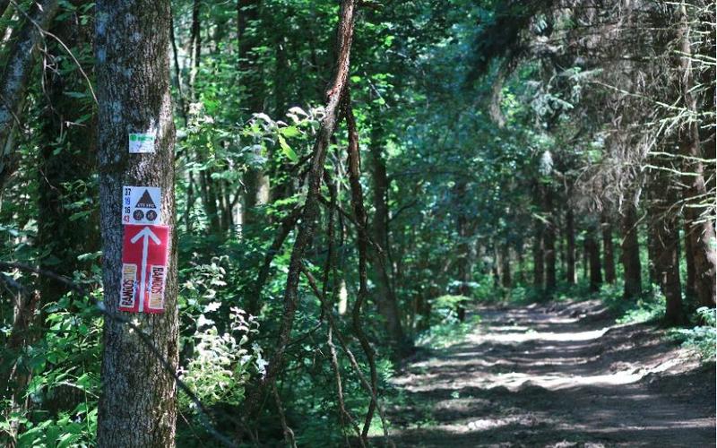 RETOUR sur juin 2015 : mon premier 100 bornes à VTT - La 'Bois Noirs Oxygène'