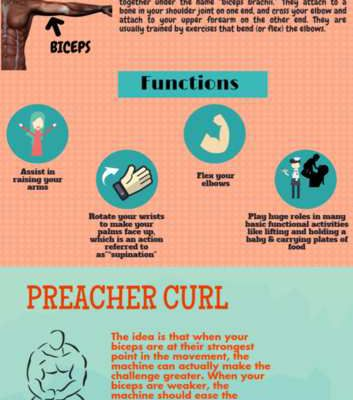 INFOGRAPHIC: Understanding the Preacher Curl with Personal Trainer Hartsdale