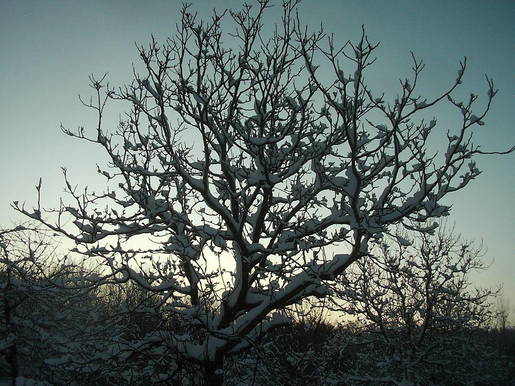 tout ce qui peut apporter au jardin forme et couleur en hiver