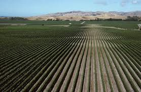 Nelson region and vine