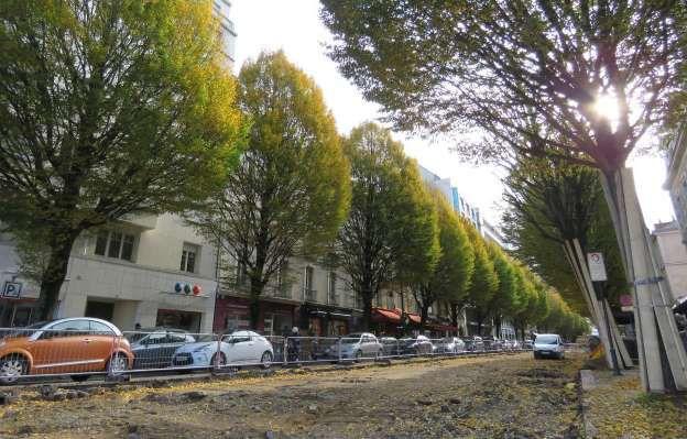 Rennes : abattage des arbres pour la 5G
