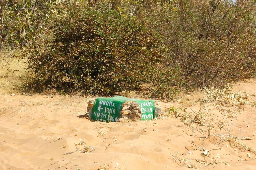 Der Weg von Chobe nach Savuti