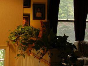 Le chat dans les plantes