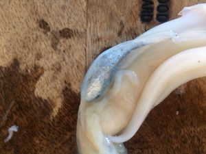 Nettoyer un calamar : rien de plus facile
