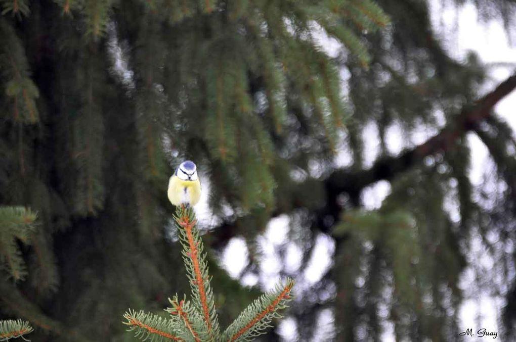 Pour les plus petits oiseaux, prises de vue au 500mm, tous pris dans ma campagne environnante ou au bord de la Marne à Château-Thierry (02)