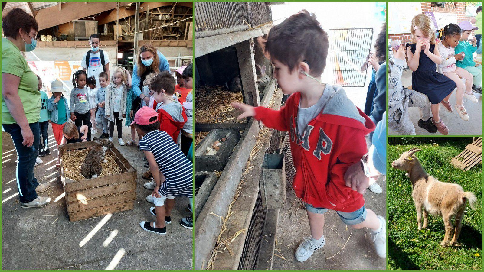 Visite d'une ferme pédagogique