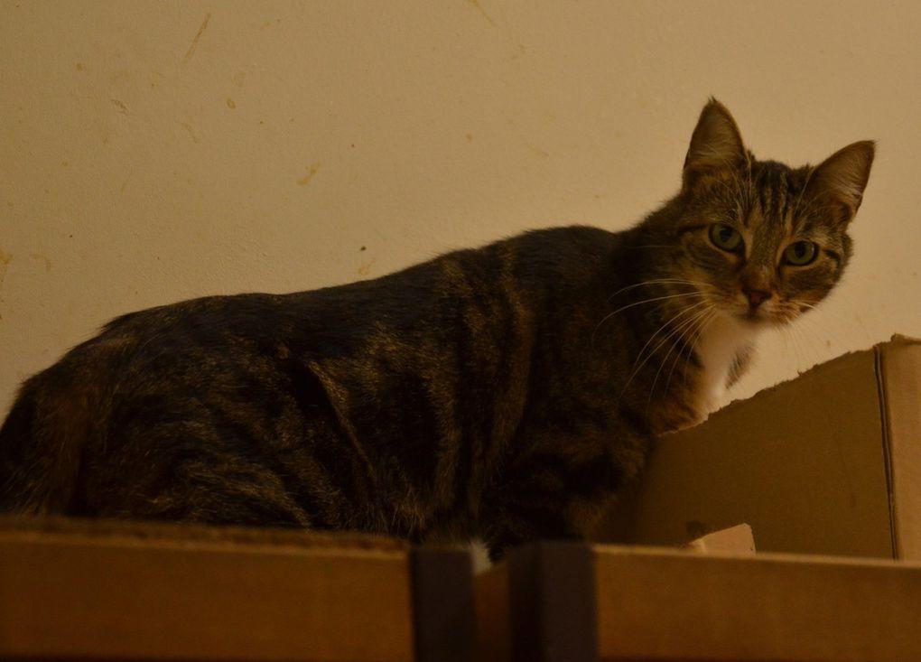 Partie : EVY, chatte stérilisée, âgée de 2 ans