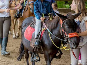 Stage Equitation Comines - 21 juillet