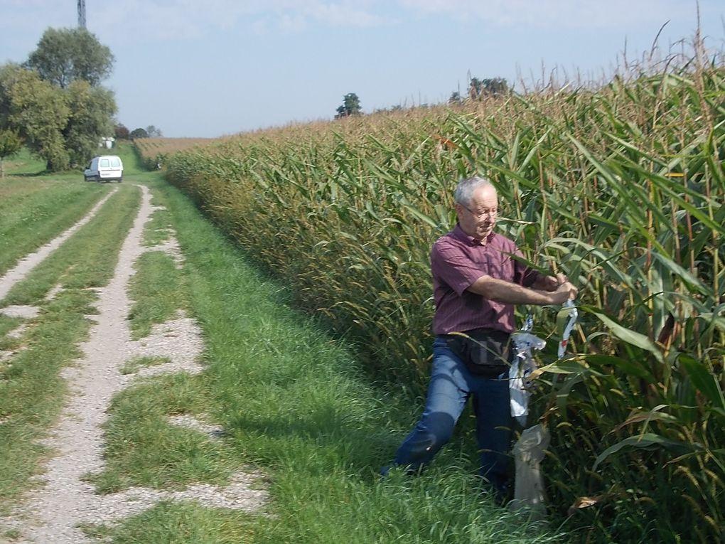 412 marcheurs à la découverte des environs d'Entzheim par un temps radieux