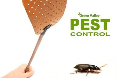 4 Points Not To Ignore To Select A Company For Pest Control In Vancouver