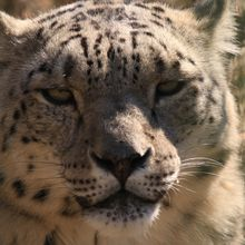 Kyrgyzstan - The country of snow leopards