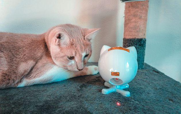 Le laser Dancing Dot de PetSafe