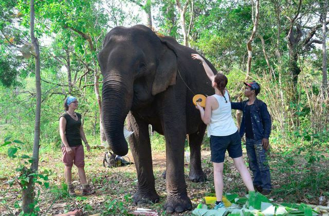 Cambodge 2015: Elephant Valley Project - Sanctuaire pour éléphants