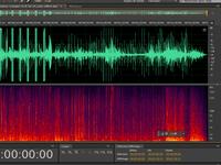 Sperm whale recording©Audionaute