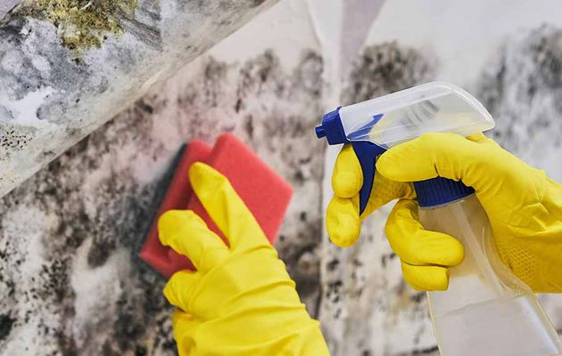 Tips For Treating And Preventing Mould After A Storm, Flood Or Cyclone