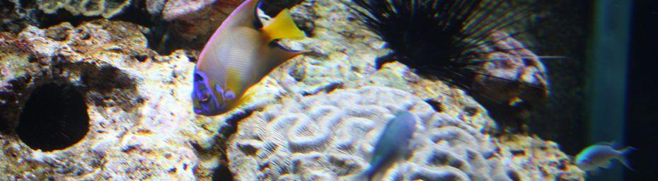 L'aquarium de La Rochelle.
