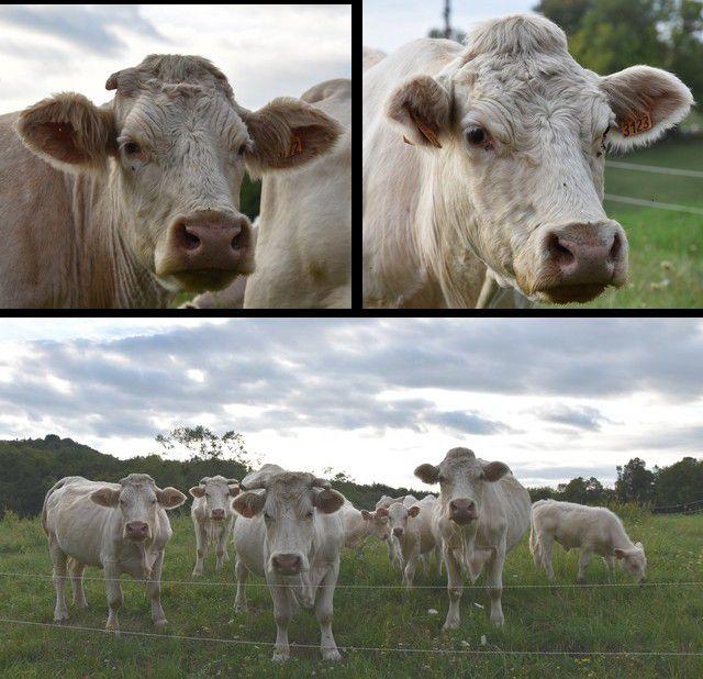 oh la vache.....