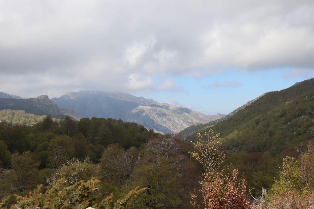 Le plateau du Coscione (Corse)