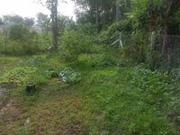mon boulot ce matin....mon jardin