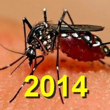 Alerte sanitaire au risque élevé de chikungunya en France métropolitaine transmis par le moustique tigre