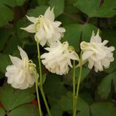 Merci aux seedlovers - Emmanuelle du Nord - Jardins merveilleux