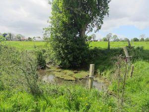 La découverte d'un petit fleuve, à côté de l'école - la Guintre