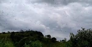"""Une impressionnante """"pluie d'araignées"""" a été filmée au Brésil!"""